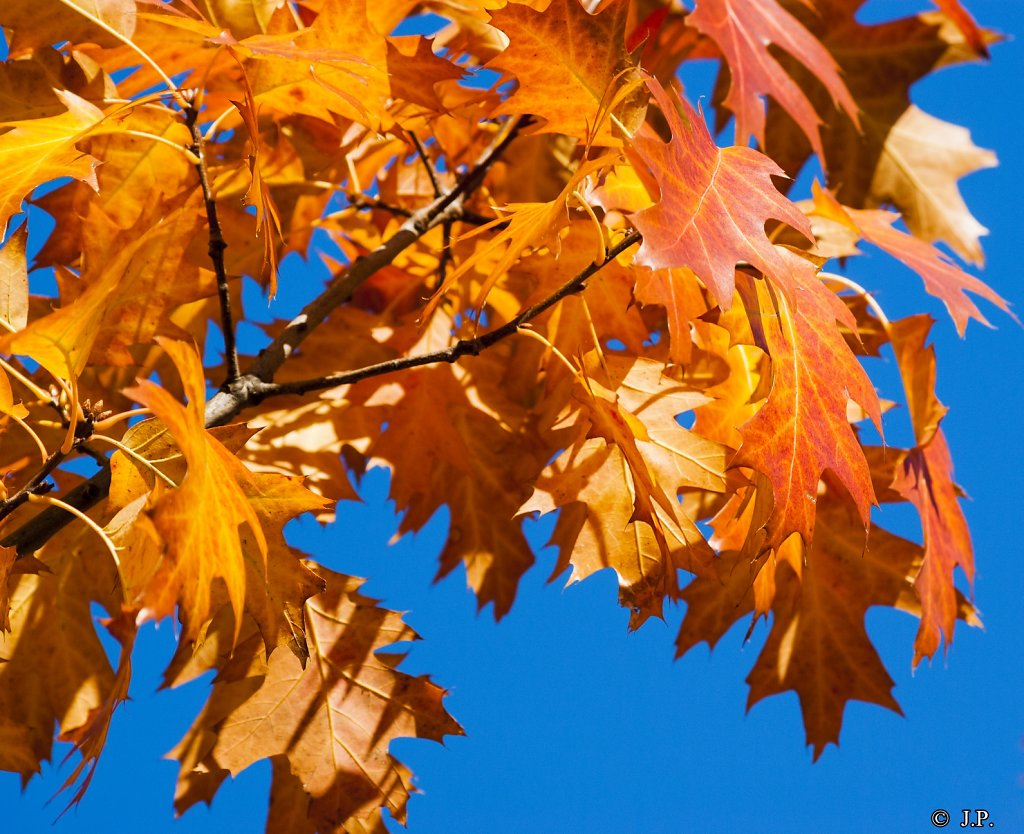 Herbstliches - Autumnal