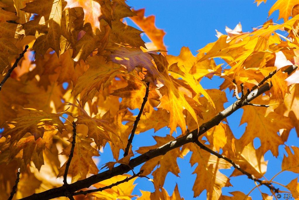 Autumnal orange