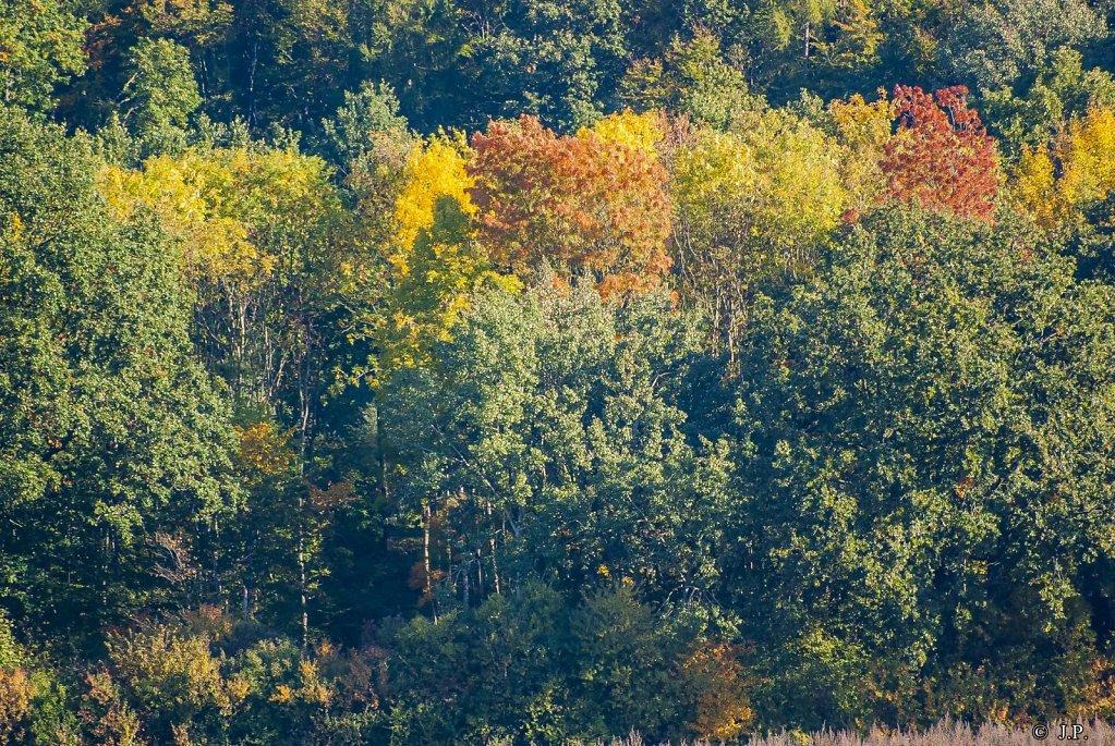 Herbst im Elm-Lappwald