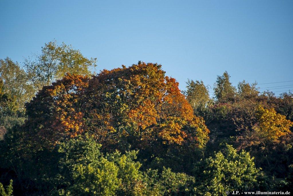 Herbstliche ExImpression