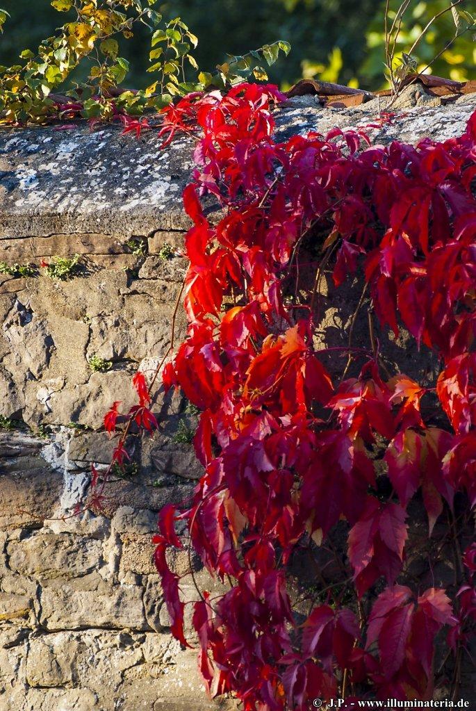 Autumnal red - Herbstliches Rot