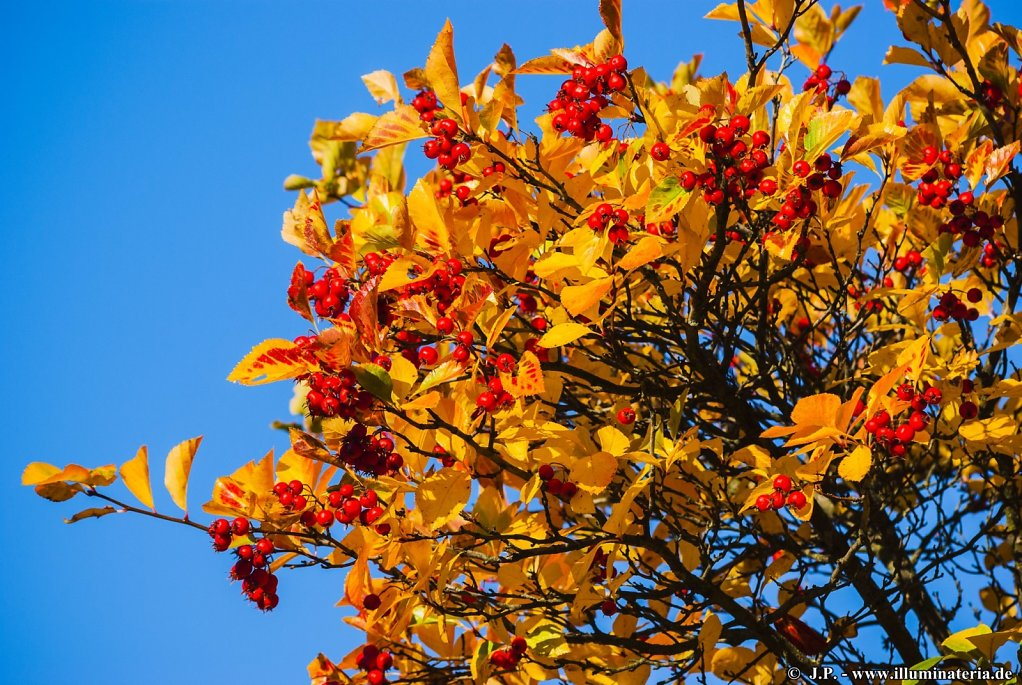 Autumnal brightness