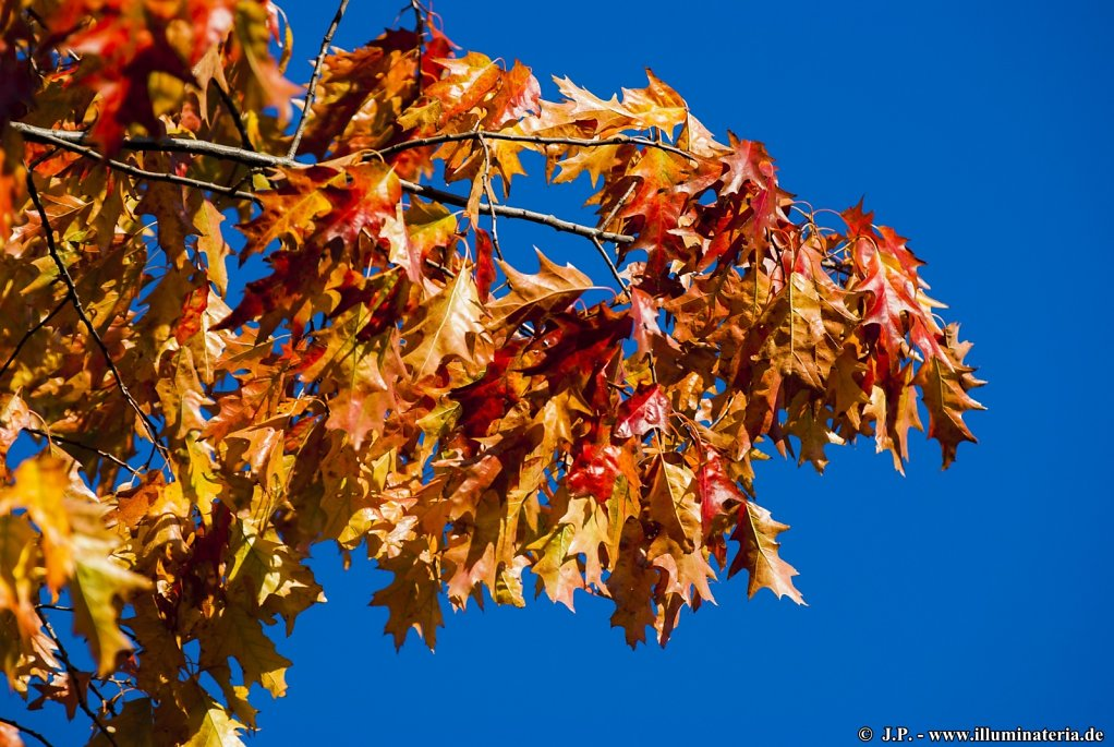 Autumn - Elm-Lappwald