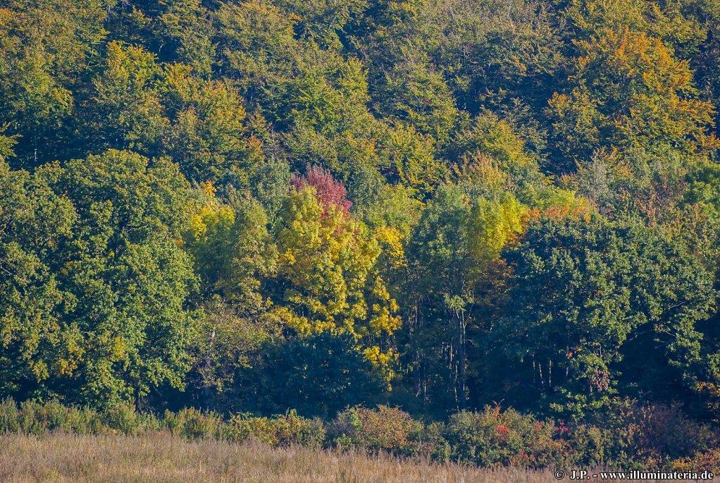Herbst - Dorm - Elm-Lappwald